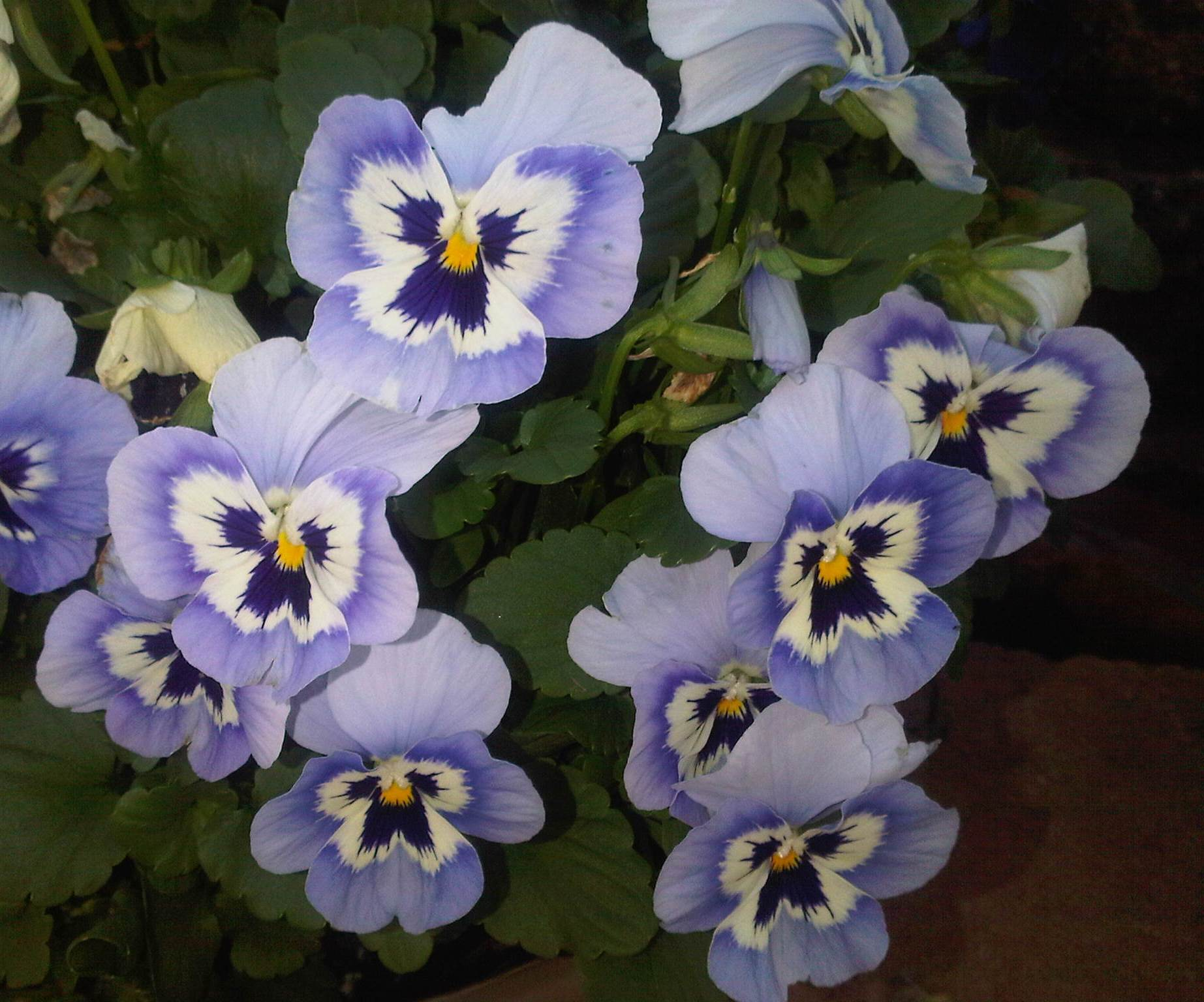 Pansy Luanne Castles Writer Site