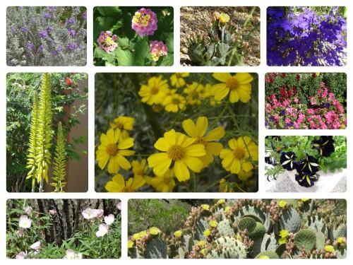 Arizona flowers April 2013