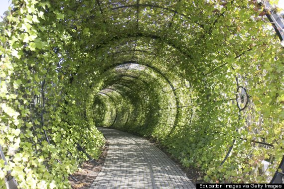 United Kingdom, England, Northumberland, Alnwick, The Alnwick Garden, The Poison Garden, Tunnel. (Photo by Jeffrey Greenberg/UIG via Getty Images)